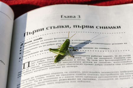 caelifera: The grasshopper is an insect of the suborder Caelifera in the order Orthoptera Stock Photo