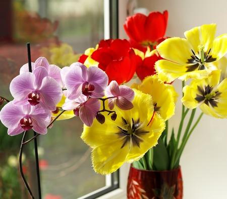bl: vase of tulips Stock Photo