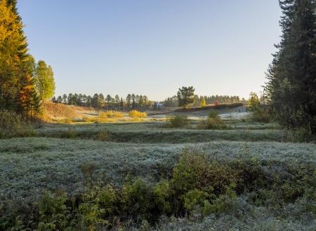frosty morning: frosty morning Stock Photo