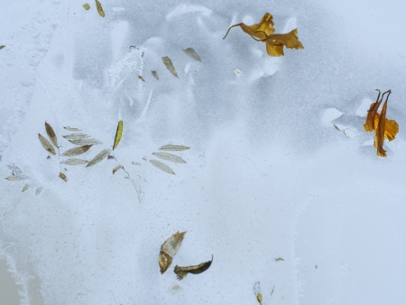 haiku: winter motive