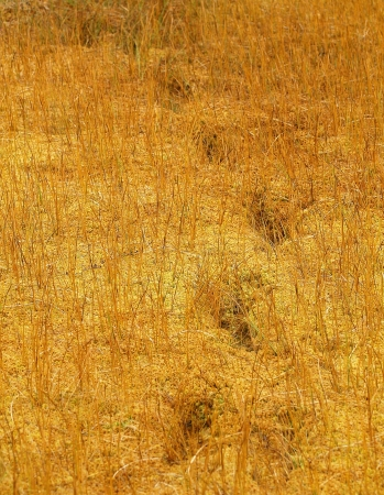 squelch: mans traces on the bog