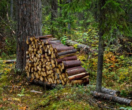 woodpile: woodpile