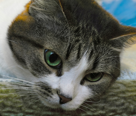 furtive: cat