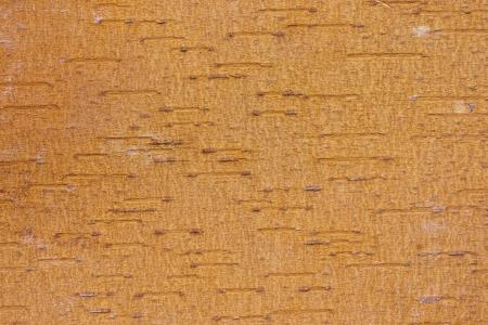brownish: brownish backside upper birch bark  Stock Photo