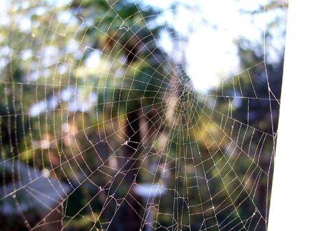 spider web photo