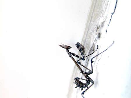 arachnoid: insetto disgustoso
