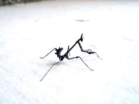 arachnoid: weird bug