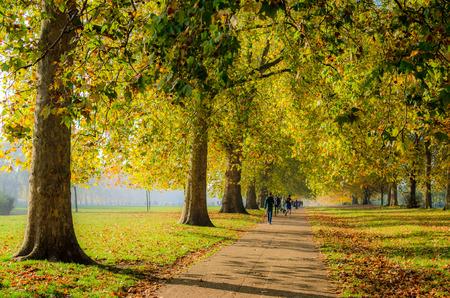 Personnes marchant sous un chemin bordé d'arbres en automne, Hyde Park