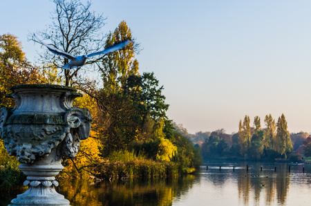 noon: Flying pigeon by a pond in Hyde Park in autumn Stock Photo