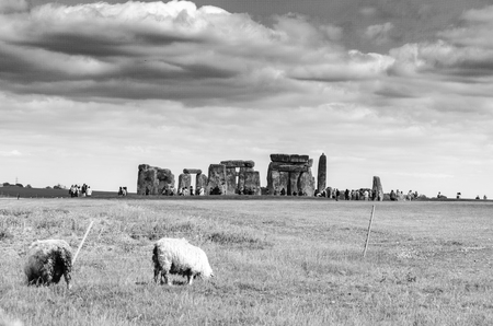 Sheep graze by Stonehenge in the English countryside, Salisbury, United Kingdom