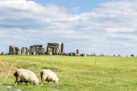 Sheep grazing by Stonehenge in Salisbury, Wiltshire, England