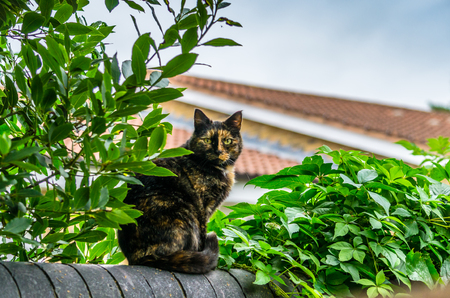 A cat sitting on a fence amongst the leaves