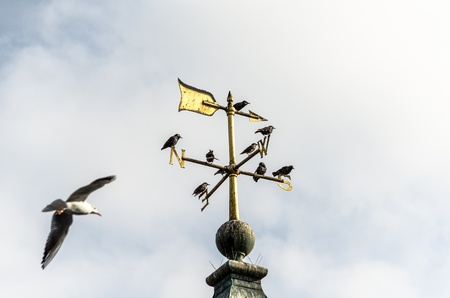 Birds and a weather vane against a cloudy white sky