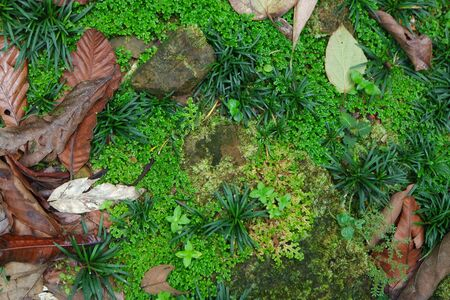 woderful: the woderful ground texture of the rainforest, fallen leaves and green grass Stock Photo