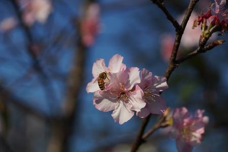 SAKURA and Bee photo