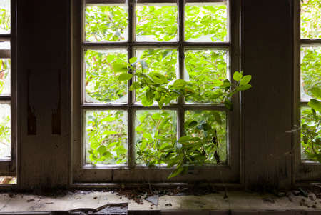 Green growing leaves entering through a broken window in abandoned building.