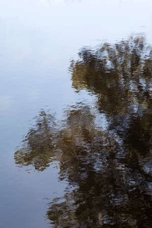 Tree branch reflection in still blue lake surface on soft afternoon.