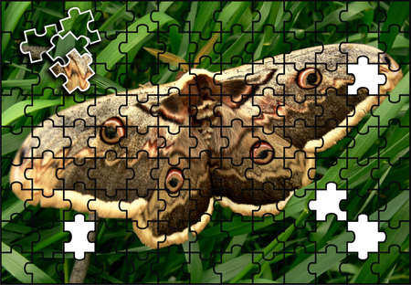 Butterfly puzzle Stock Photo