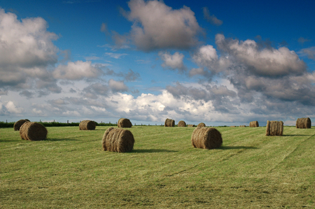 fencepost: Bales of Hay in a Field on th Isle of Tiree Stock Photo