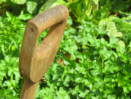 Garden spade handle with a green foliage background
