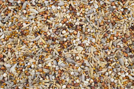 close up of a mixture of healthy seeds viewed from above