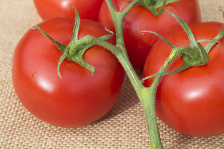 Close up of fresh ripe healthy Vine Tomatoes on a hessian material Reklamní fotografie