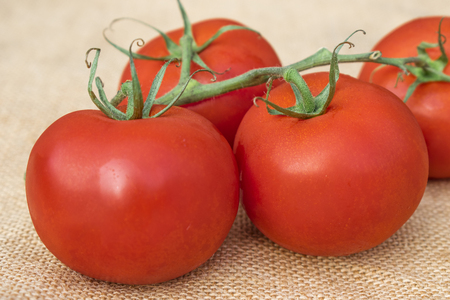 Close up view of a group of fresh ripe healthy Vine Tomatoes on a hessian material