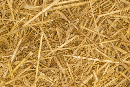 Straw Background texture close up