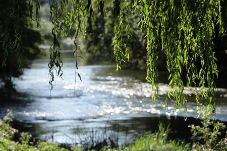 willow: Willows in front of stream Stock Photo