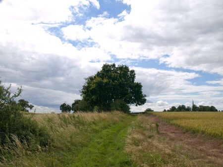 clody: Landscape view of a field of crops with trees and clody sky