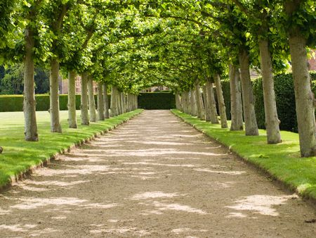 tress: Garden with a lawn and an avenue of tress