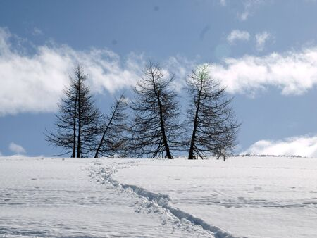 Snow covered slope with trees and ski tracks photo