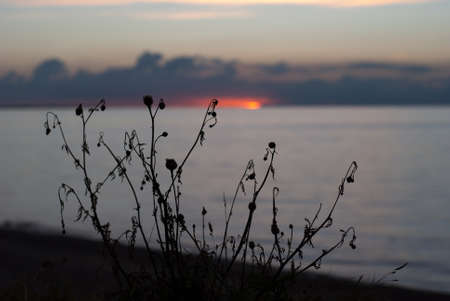A picture of a sunset over the ocean with a silhouette of plants in the foreground photo