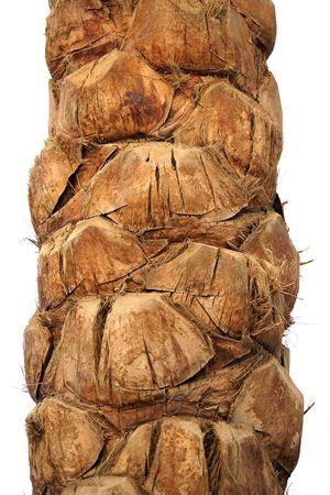 Palm Bark at Egypt photo