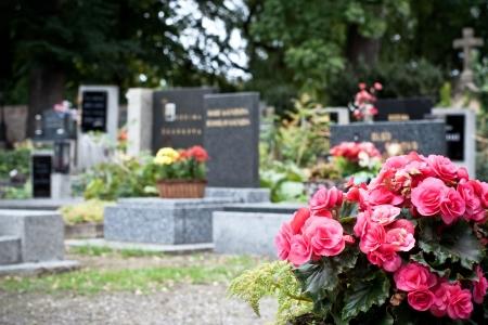 Roze begonia op een tombstone op de katholieke kerk hof