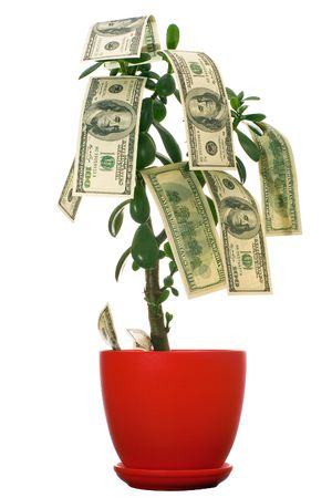 Dollars growing on the monetary tree isolated on white background  photo