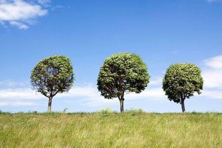 Drei Bäume in einer Linie