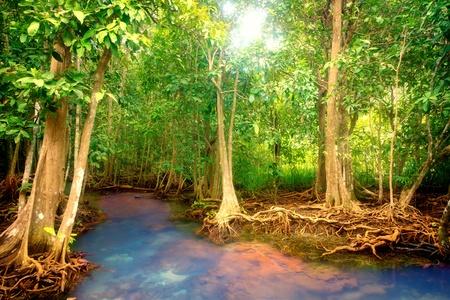 タイの熱帯雨林にマングローブの根