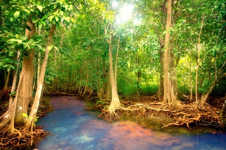 tropical rainforest: Roots of mangrove trees in rainforest, Thailand Stock Photo