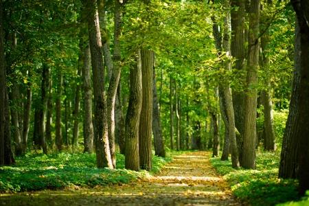 Żółte liście na alei w lesie jesienią