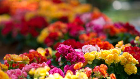 flowerbed: Flowerbed with multicolored flowers Stock Photo
