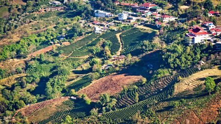 View of Mae Salong village with tea plantation, Chiang Mai province, Thailand photo
