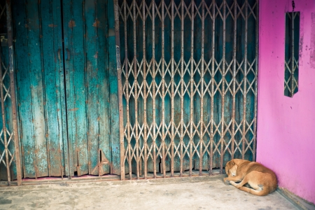 The sleeping dog is lying in the corner of a building photo