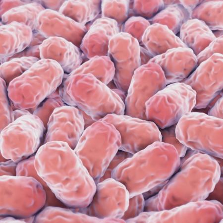Many single-celled pink microorganisms Standard-Bild