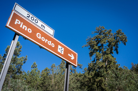 pino: Road sign to famous oldest pine tree at Tenerife, Canary Islands