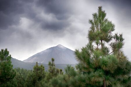 overcast: Pine tree and Teide volcano in the background, overcast Stock Photo