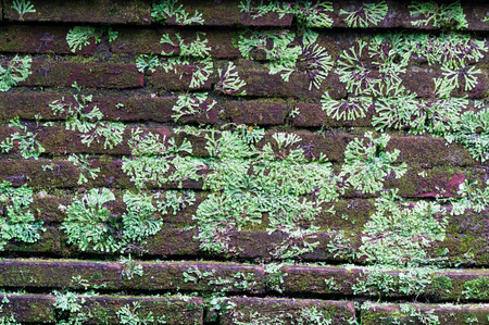 Old brick wall with moss and green leaves Фото со стока