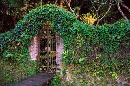 Closed gates covered with ivy to the tropical garden, Bali, Indonesia Banco de Imagens