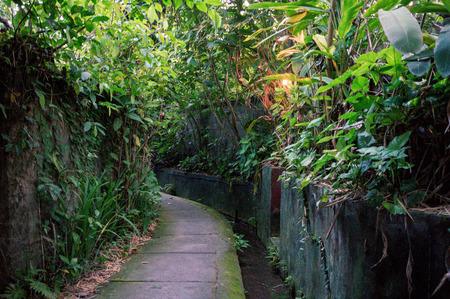 Pedestrian pathway between tropical thickets in Penestanan village near Ubud town, Bali, Indonesia