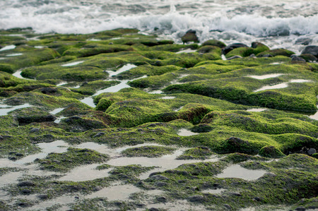 Sea tide on the moss-covered rocky beach, Bali, Indonesia